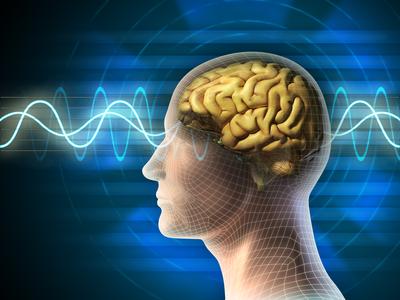 脳の仕組み